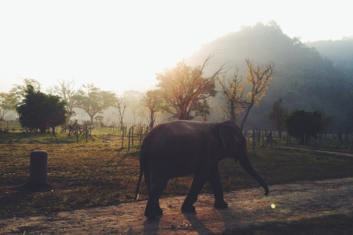 elephant in sunrise